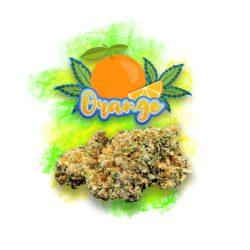 CBD Aromablüte Orange
